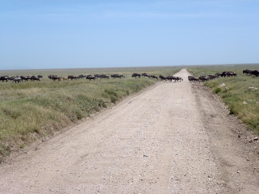 The Great Migration blocks our path.