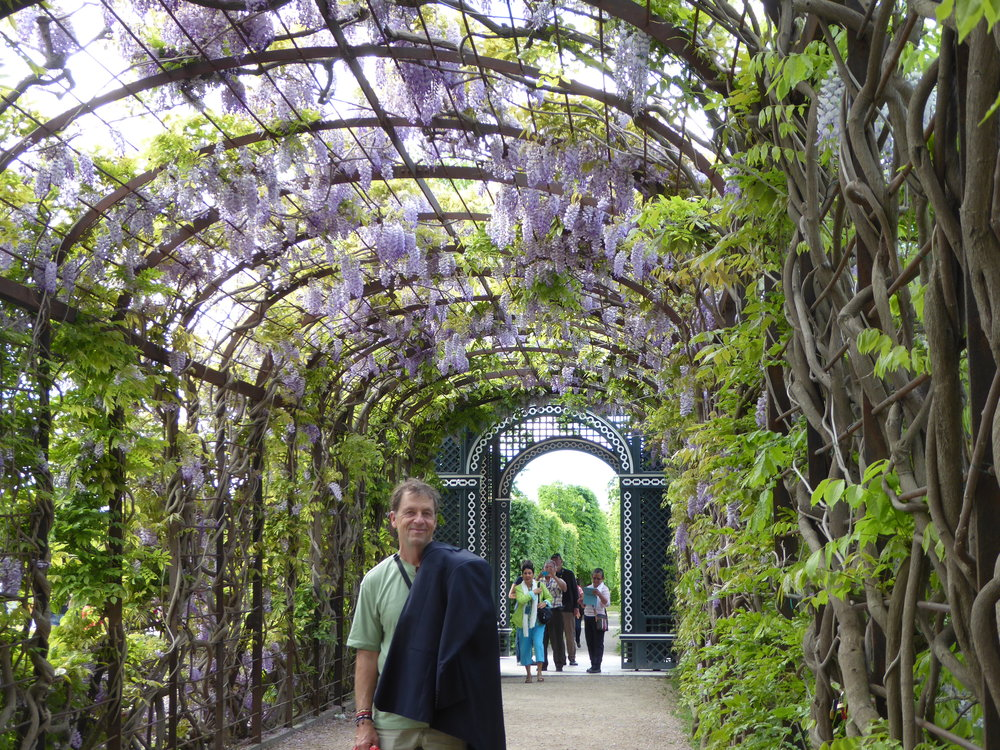Springtime is wisteria time here.