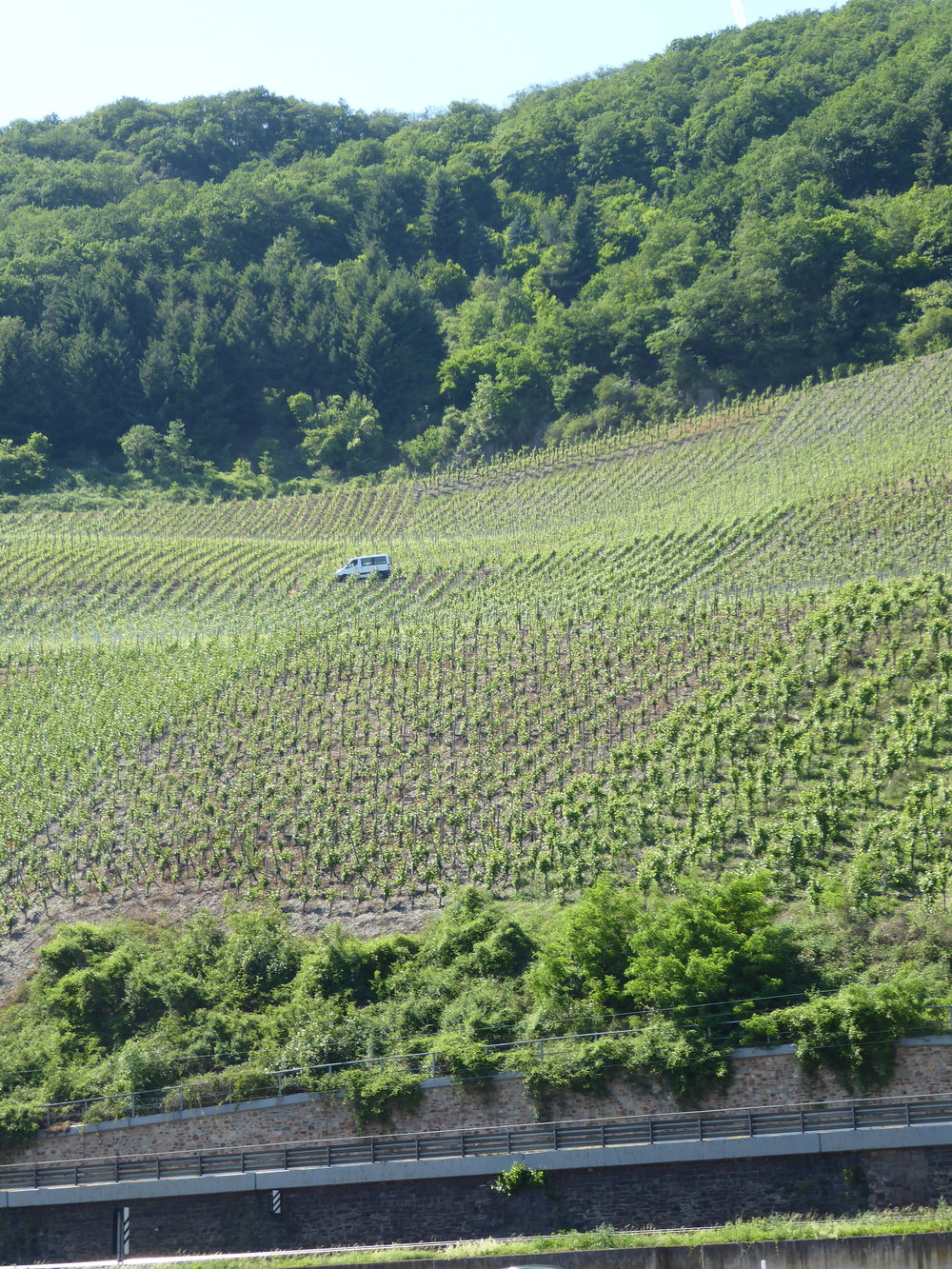 Very steep cultivation of wine. It's mostly white and you don't have to pay much for something good and dry.