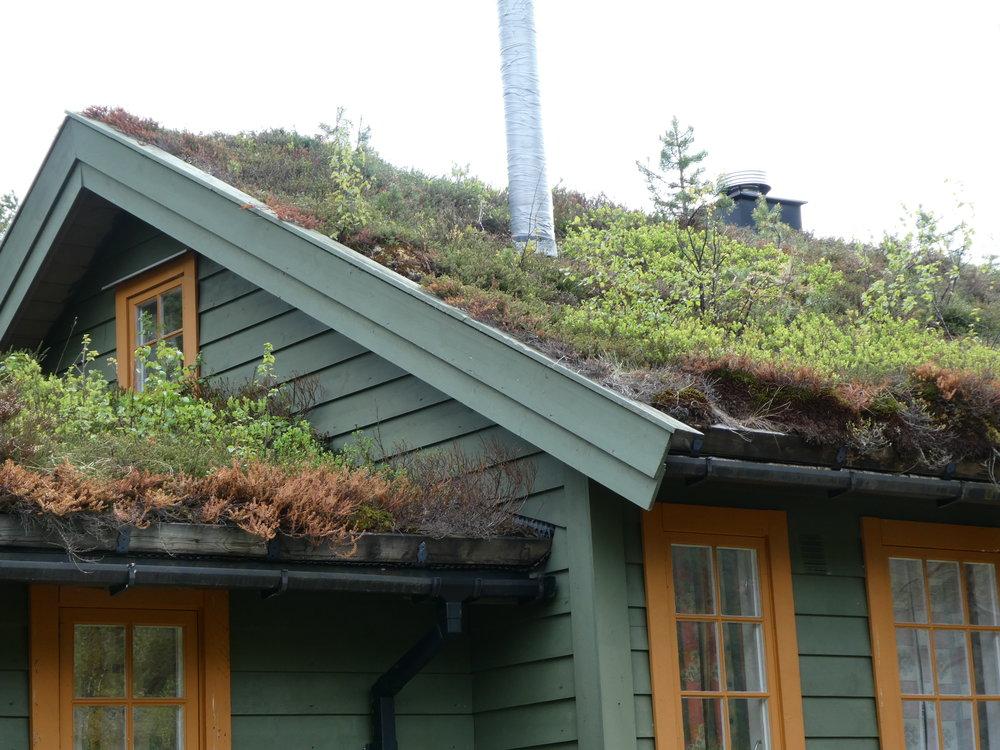Rooftop gardening.