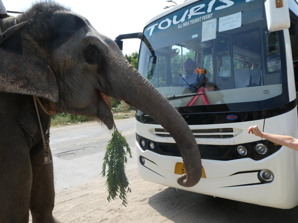 Our bus comes face-to-face with Elephant.