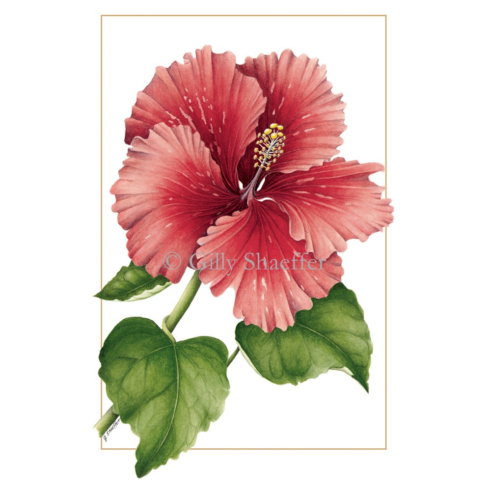 red_hibiscus copy.jpg