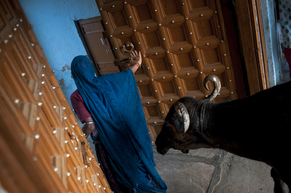 A women lets her water buffalo into the temple in Jeetawas, Rajasthan, India during a sudden rainstorm on July 21, 2015.