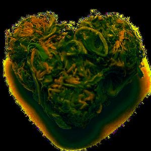 heart bud.png