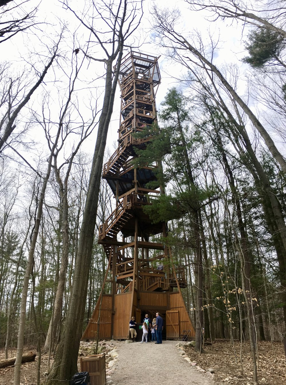 The Kalberer Emergent Tower from the forest floor.