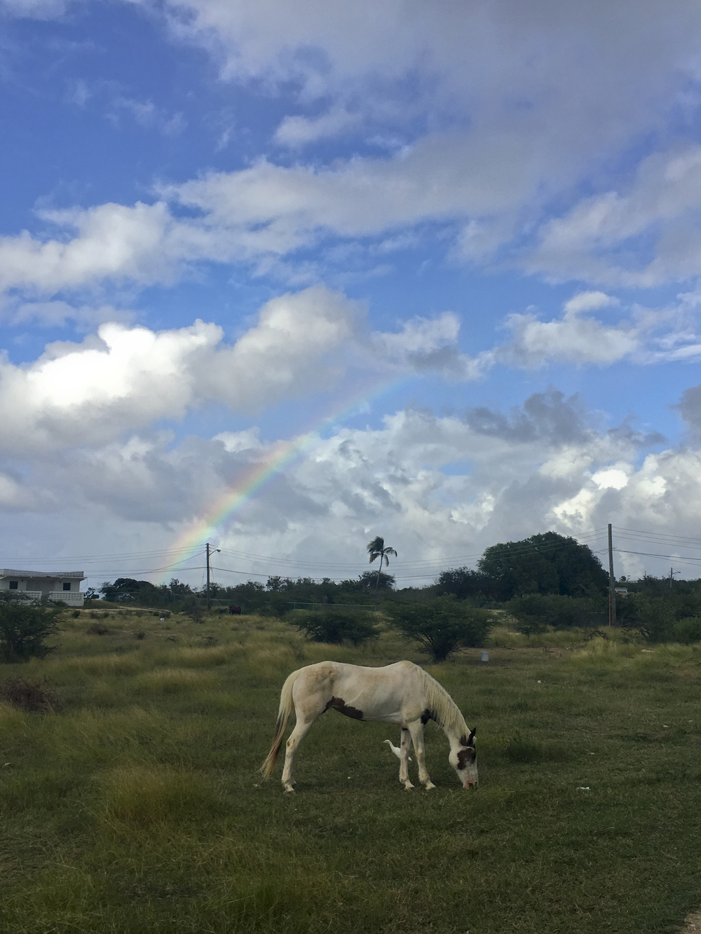 2016-01-AXA-RAINBOW-HORSE