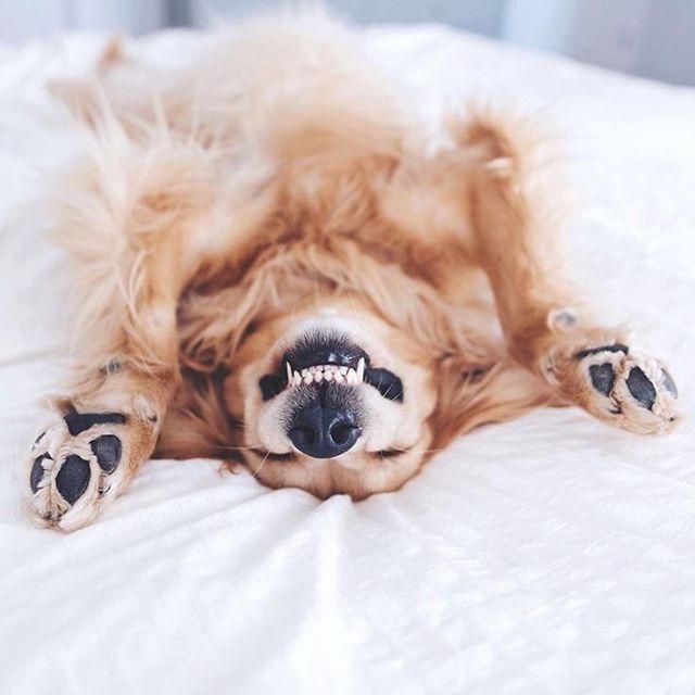 It's Fridaaaaaayyyy!! #smile #friyay #showyourpearlywhites #winterwhatwinter #tweedcoast . . 📷via Pinterest