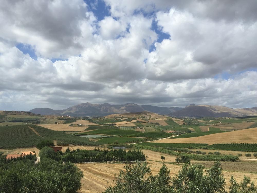 Sicilian vineyards as far as the eye can see