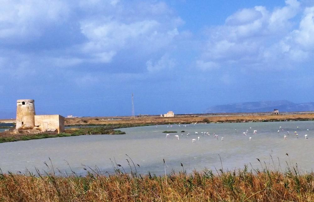Pink flamingos in salt ponds near Trapani