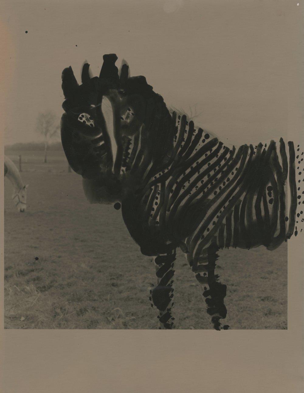 """Sacred Dog, 2010 Unique Silver gelatin print, framed 14 x 11"""" (print size)"""