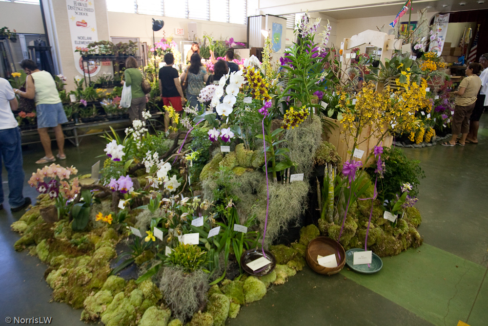 Manoa_Orchid_Show-13.jpg