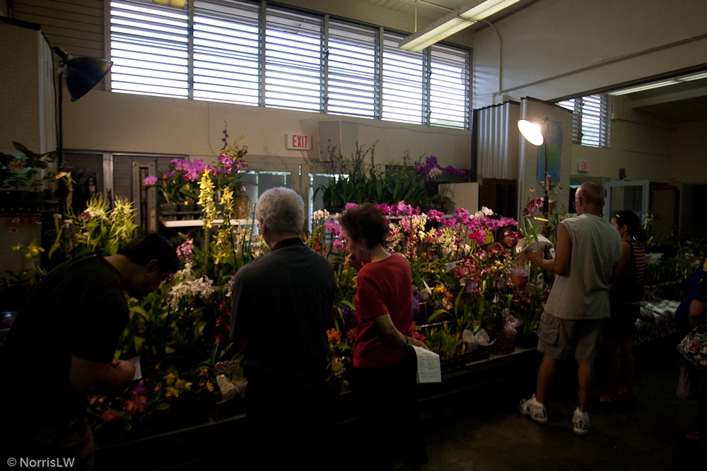 Manoa_Orchid_Show-15.jpg