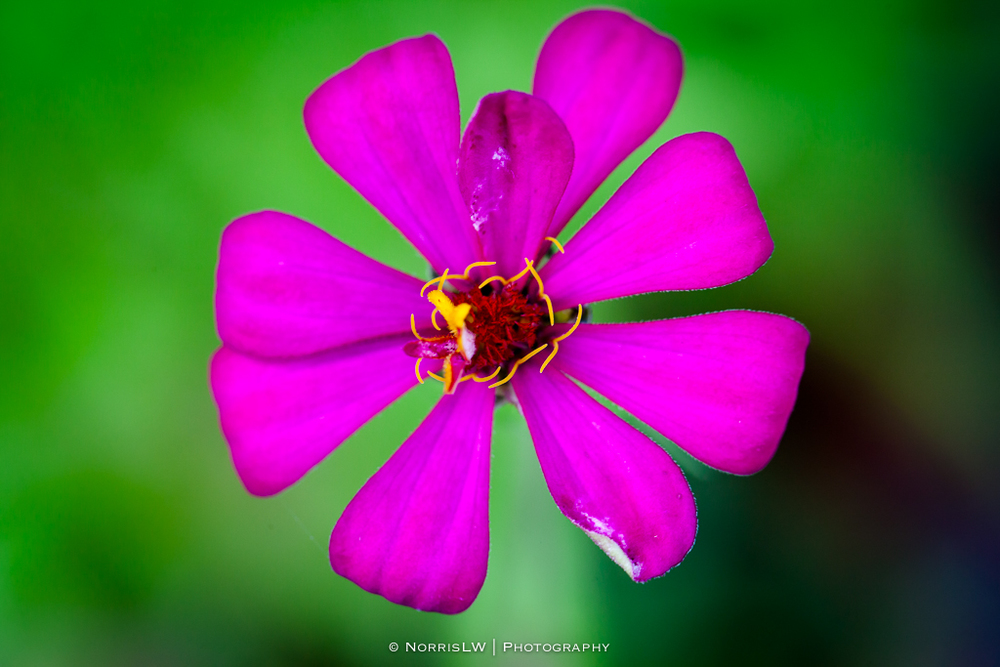 flower-20130519-002.jpg