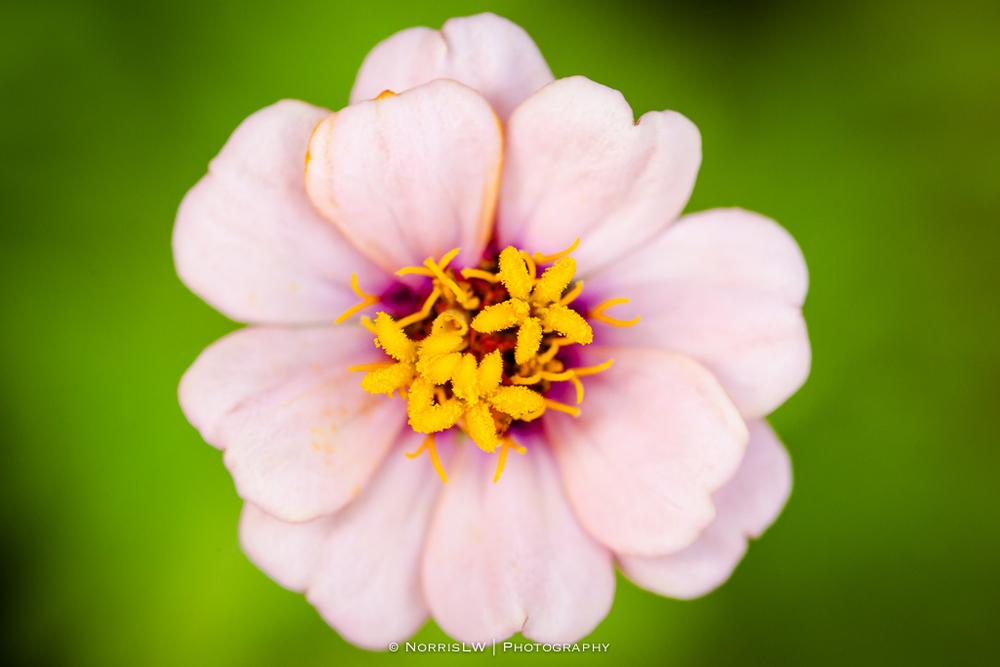 flower-20130519-003.jpg