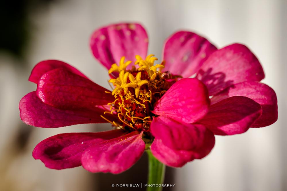 Garden-20140105-002.jpg