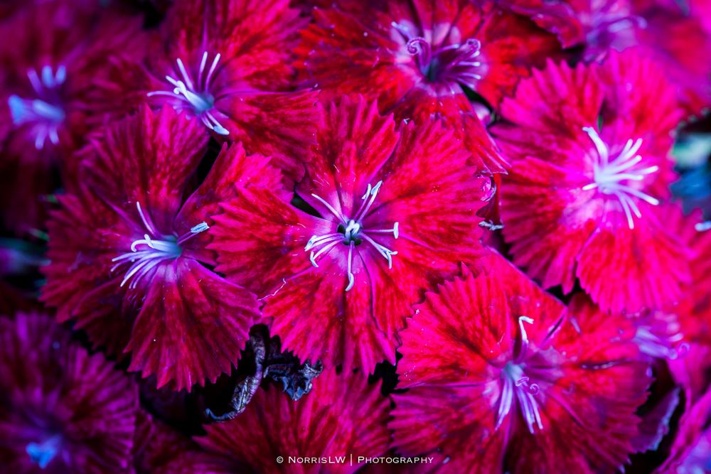 Garden-20131222-006.jpg
