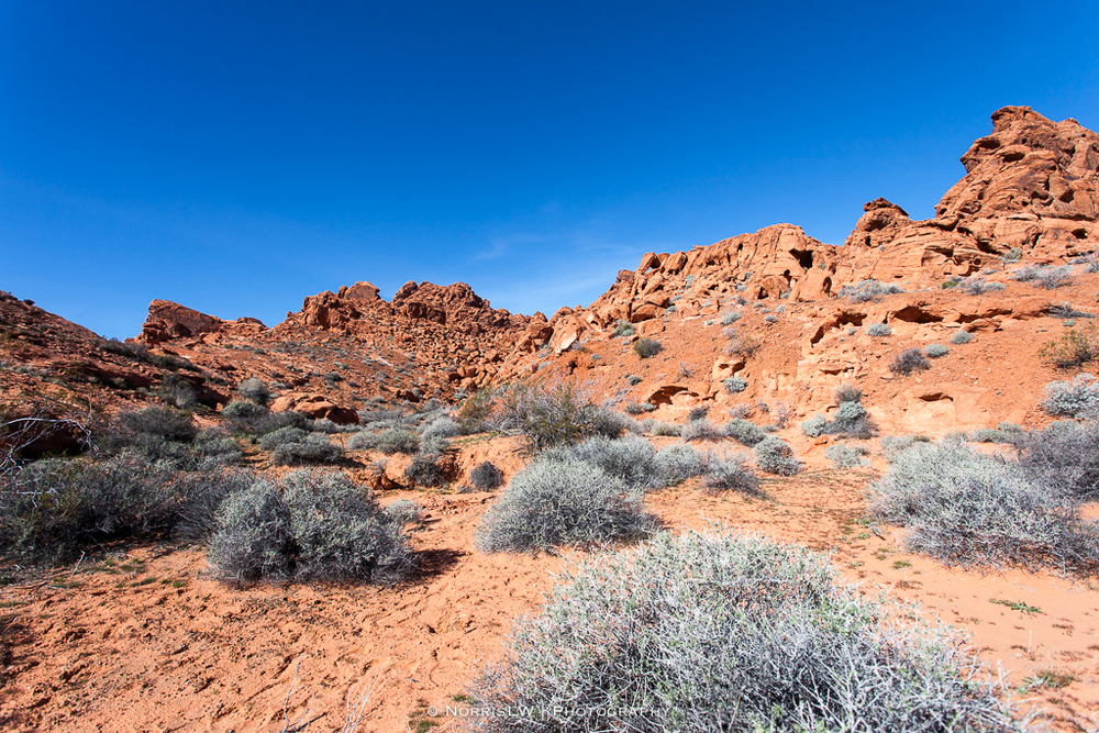 LV_ValleyOfFire-20160211-056.jpg