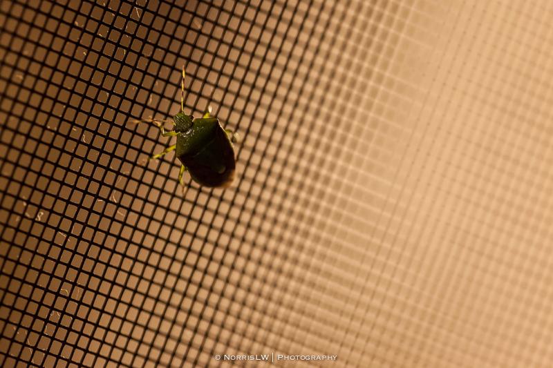 Green-Bug-20121209-001
