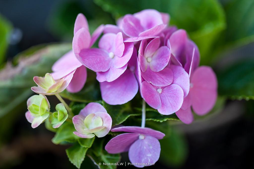 flower-20131103-001