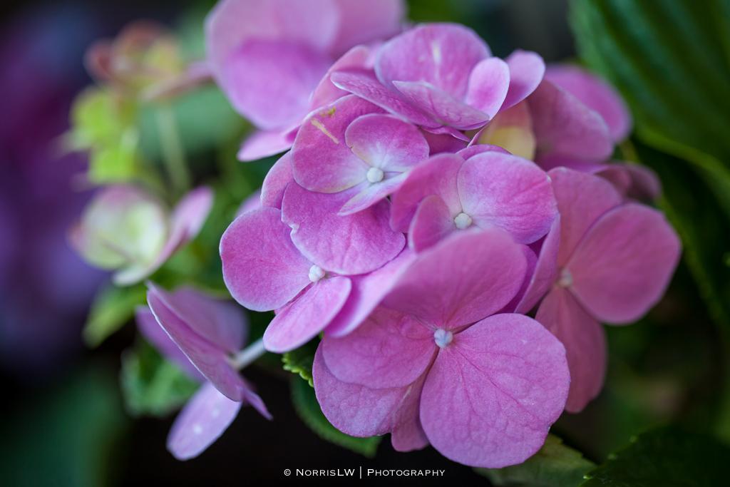 flower-20131103-002