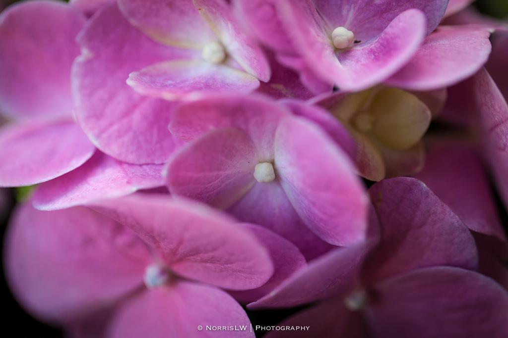 flower-20131103-003