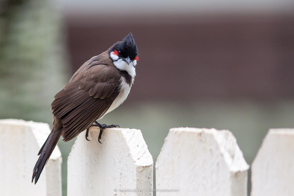 birds-20140217-001