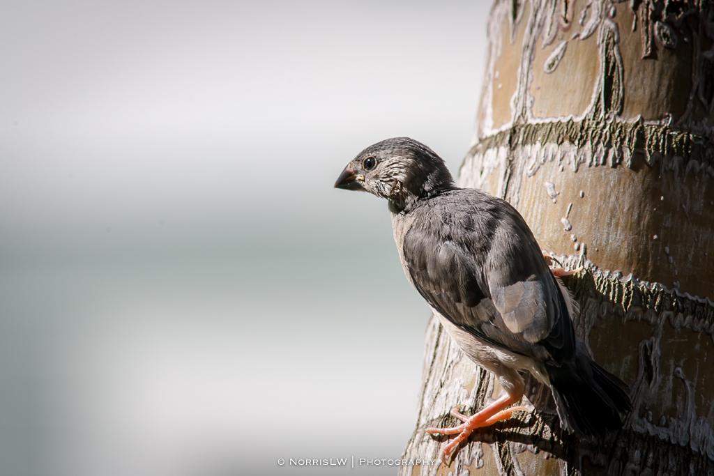birds-20140223-003