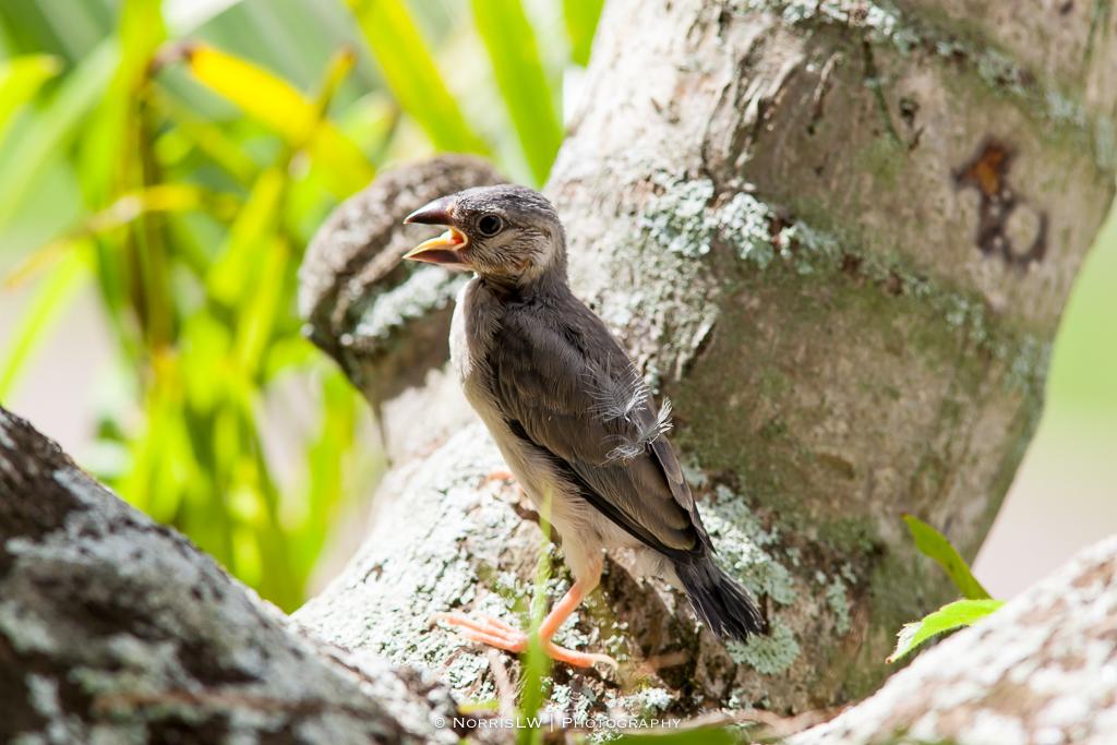 birds-20140223-004