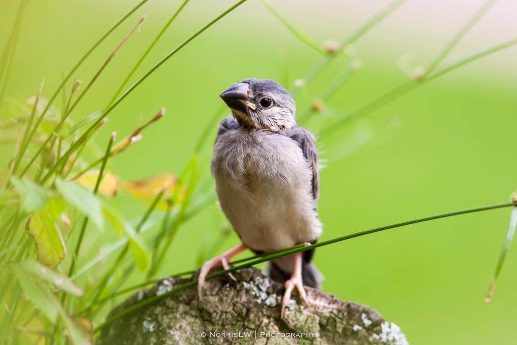 birds-20140223-007
