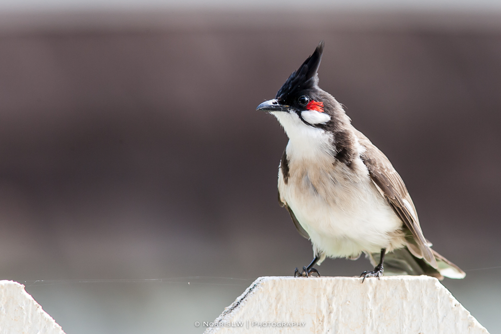 birds-20140309-001
