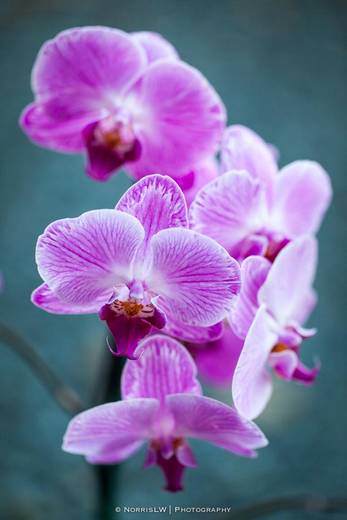 orchids-20140726-002