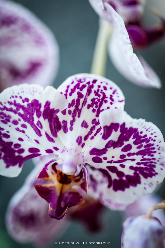 orchids-20140726-004