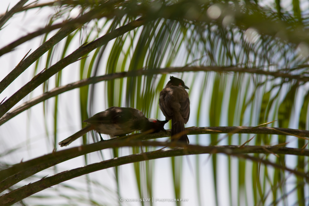 Birds-20140824-003