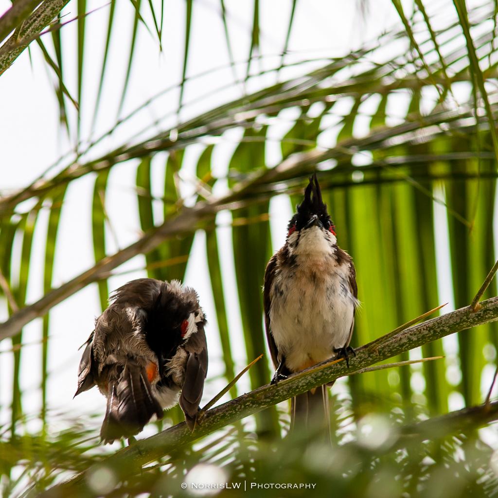 Birds-20140824-004