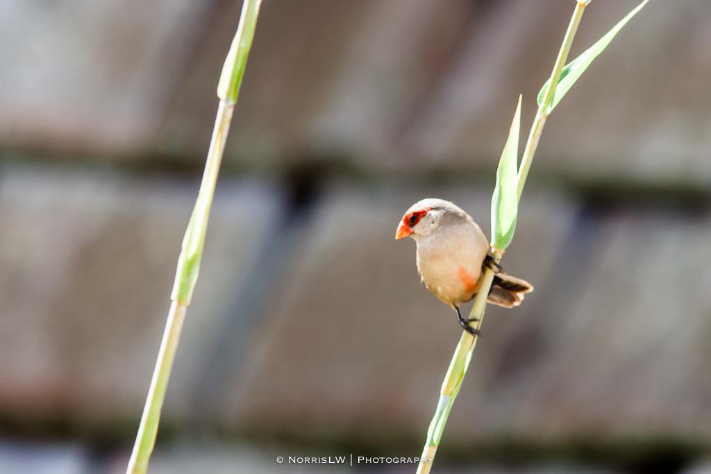 Birds-20150830-002