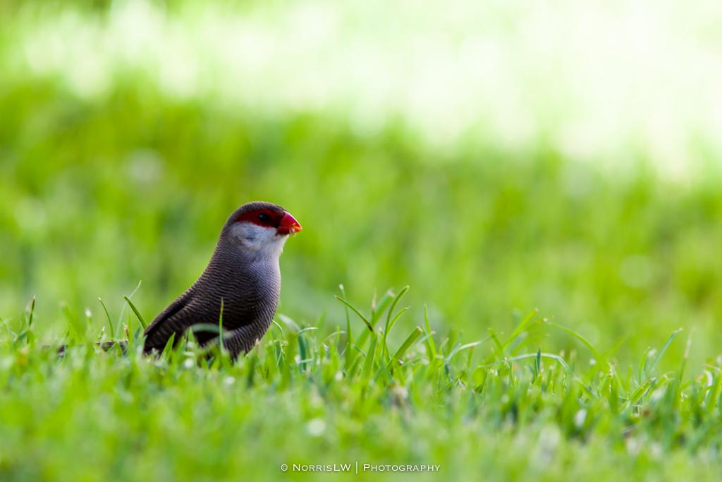 Birds-20150830-003