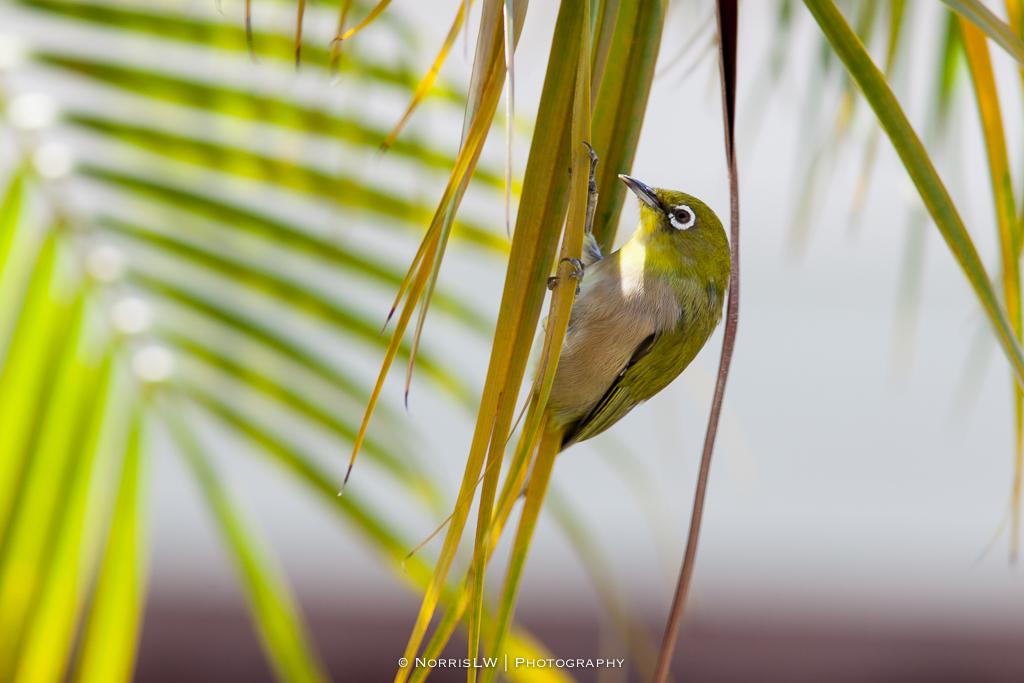 Birds-20150830-005