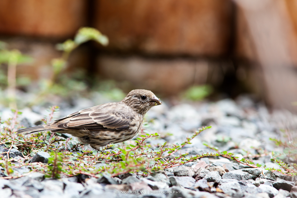 birds-20150913-007