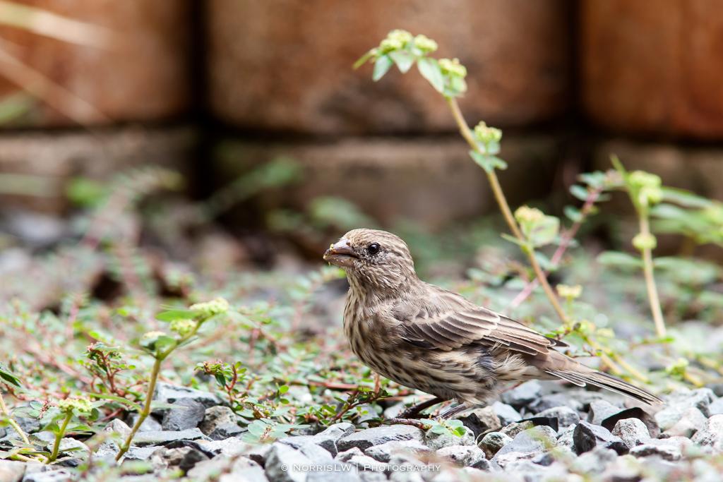 birds-20150913-008