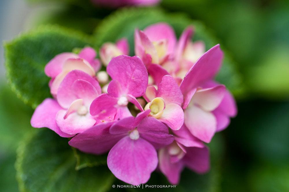 home_garden-20170422-001.jpg