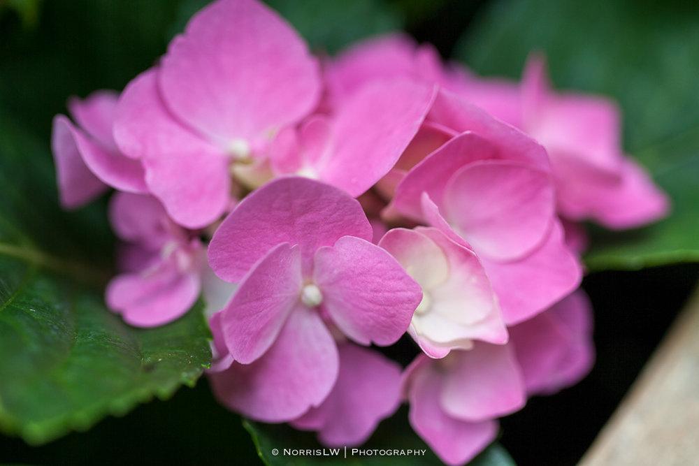 home_garden-20170422-002.jpg