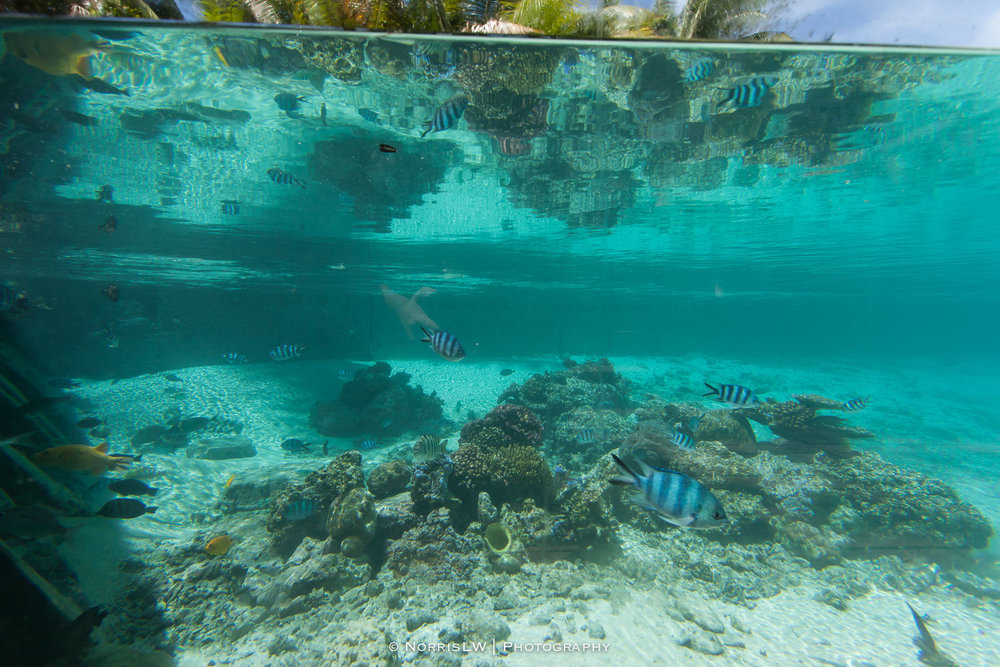 NorrisLWPhotography_Tahiti_BoraBora-20180123-035.jpg