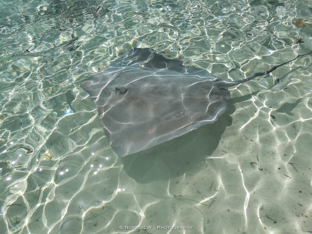 NorrisLWPhotography_Tahiti_BoraBora-20180124-091.jpg