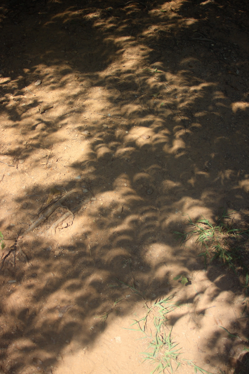 Crescent shadows in the sand email.jpg