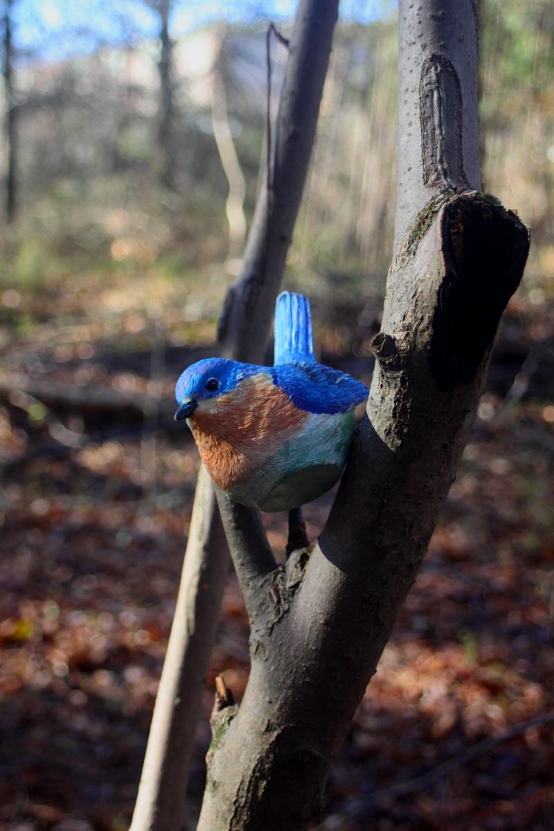 Hidden bluebird email.jpg