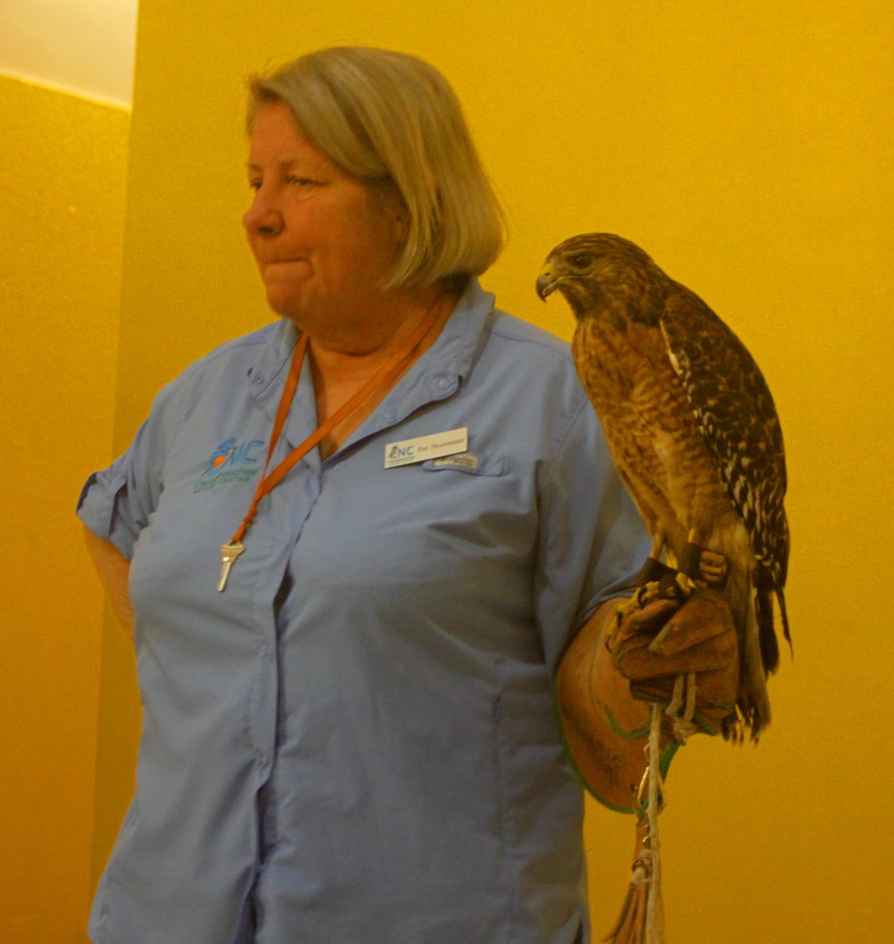 Ki Eve shares a red-shouldered hawk with us email.jpg