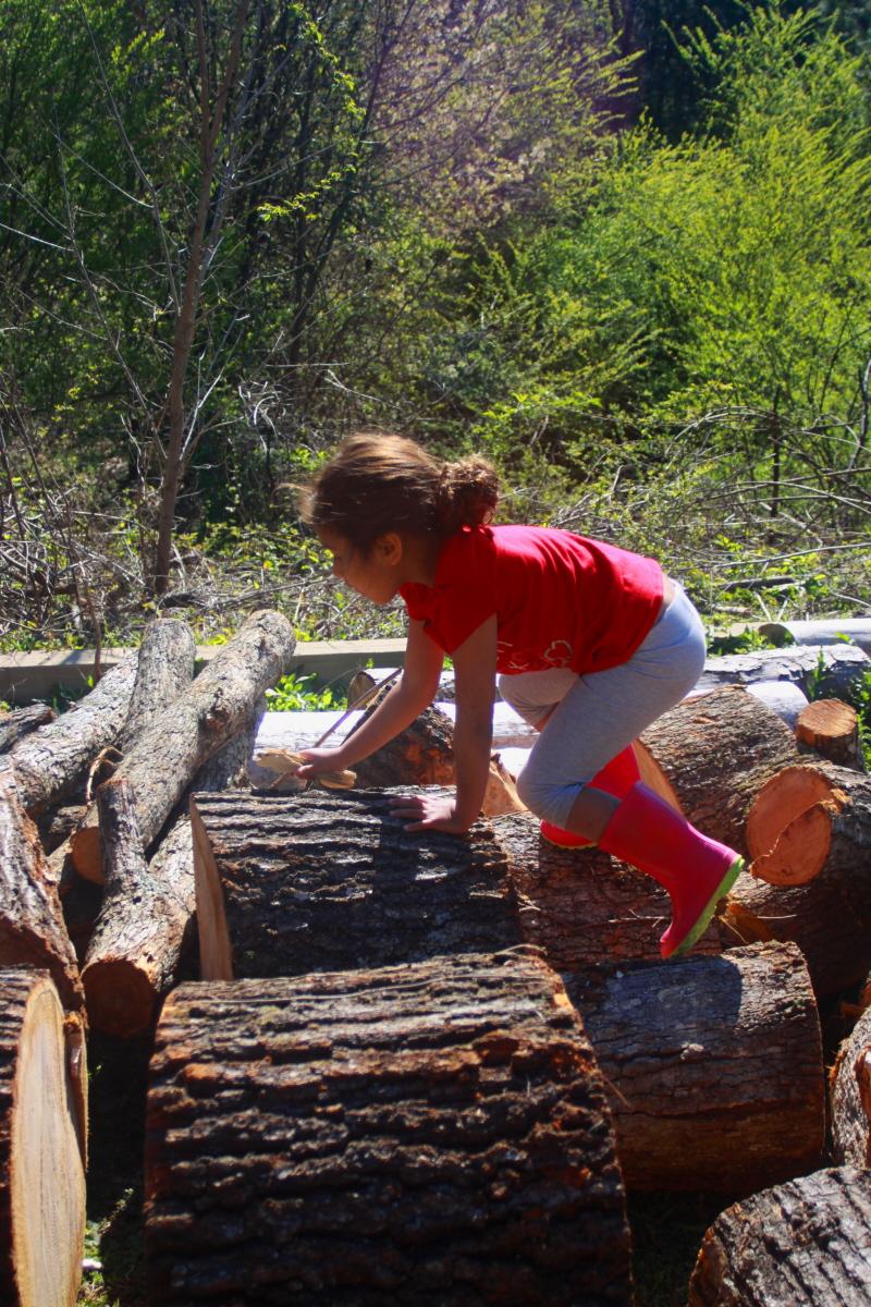 Climbing logs email.jpg