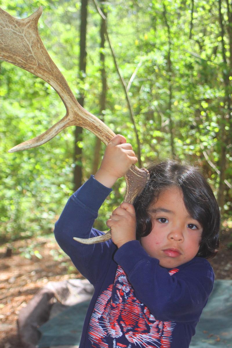 Fallow deer antler email.jpg