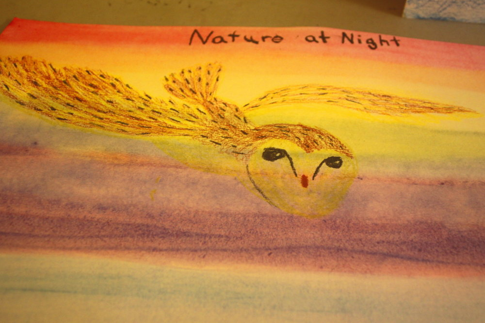 Nature at Night barn owl email.jpg