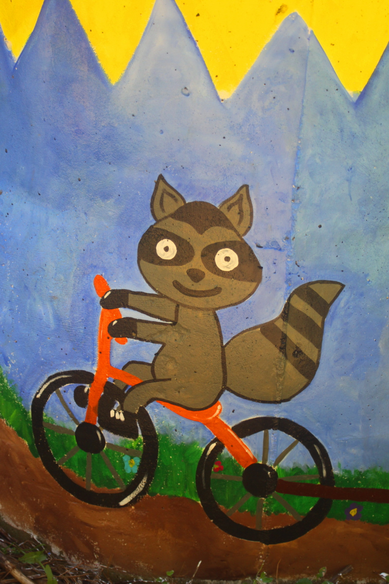 Bicycling raccoon on the storm drain email_1.jpg